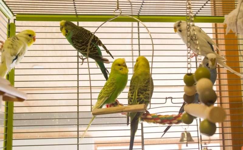 Vogels zien ons als roofdieren
