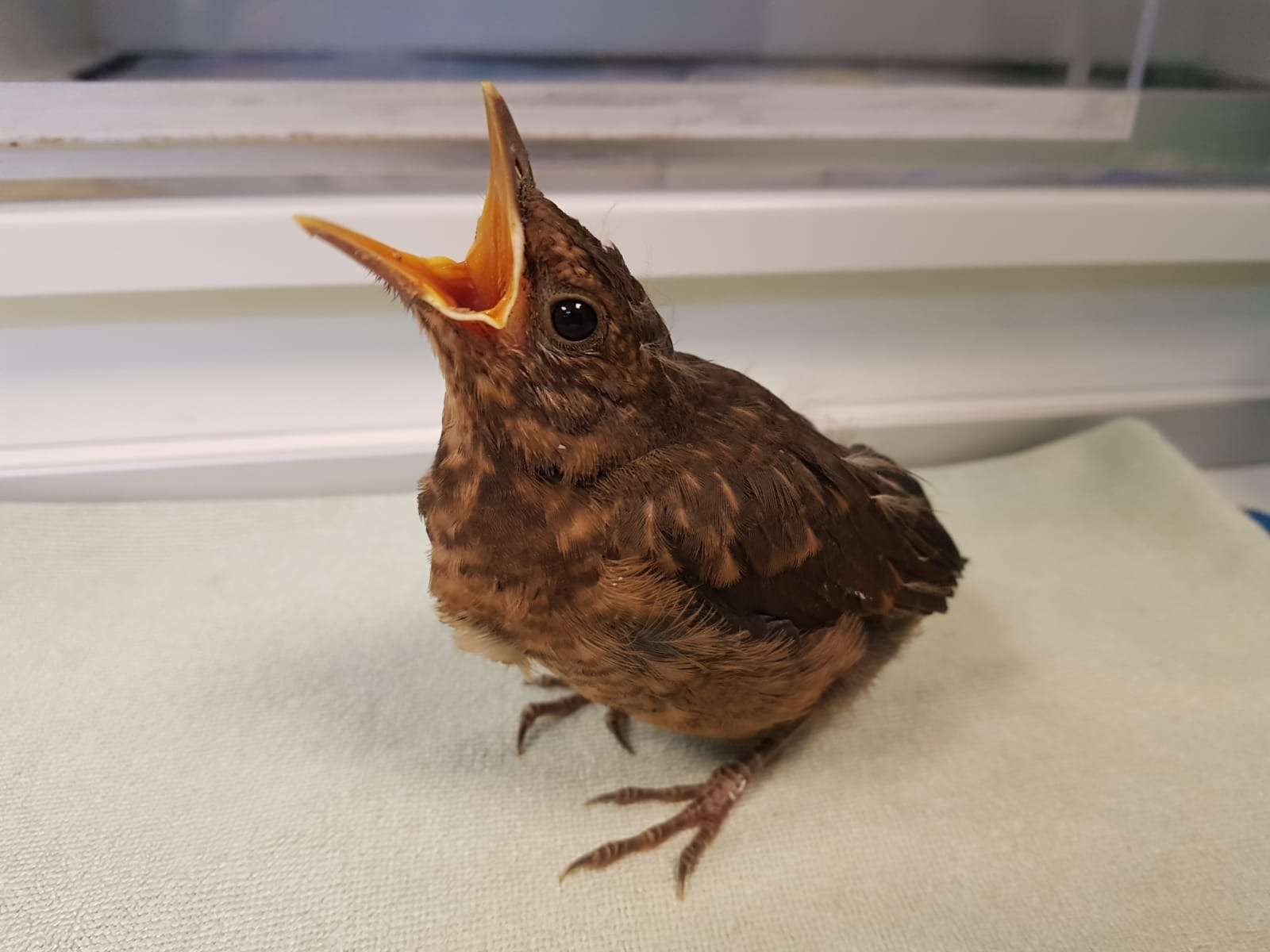 Een jonge vogel gevonden. Wat nu?