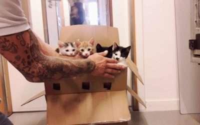Vier kittens aan hun lot overgelaten