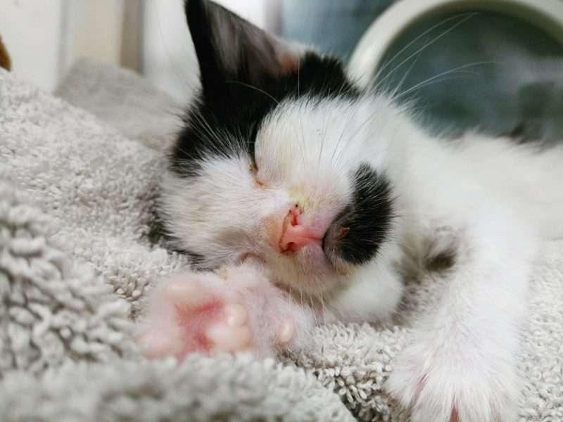 Het leed dat kittens heet