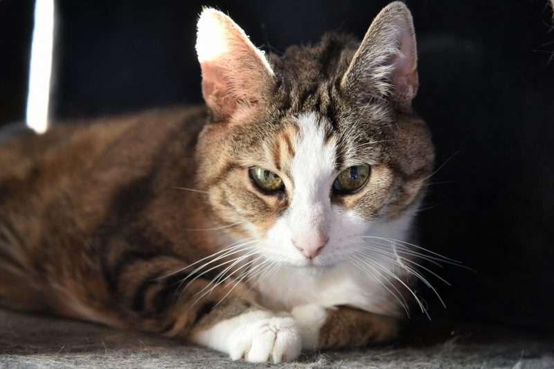 Oktober: de maand van de seniore kat