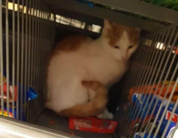 Kat in het snoepschap