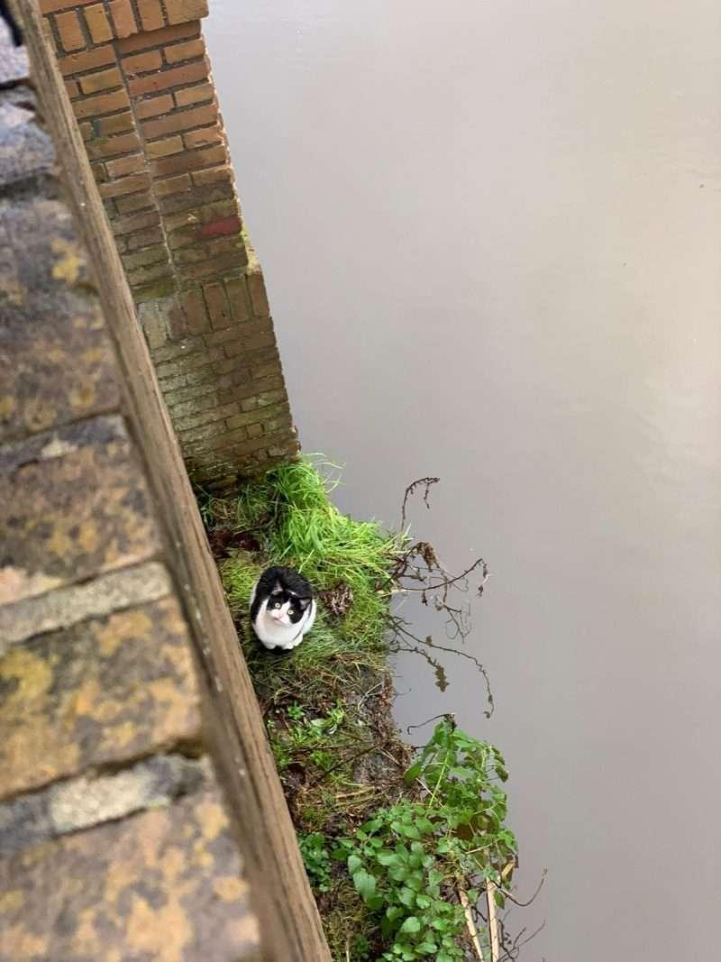Kat aan de waterkant