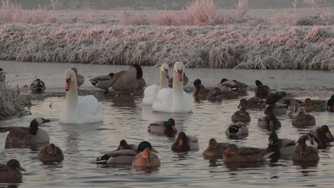 Vogels en ijs!