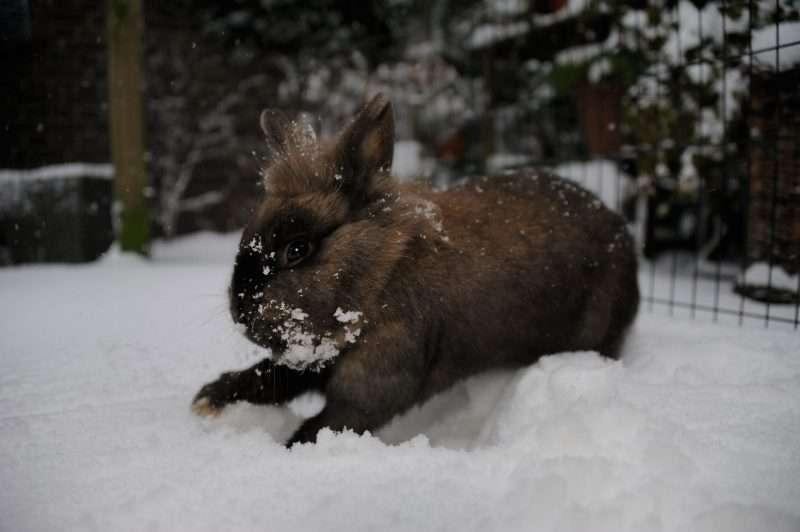 Konijnen en winters weer