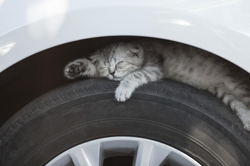 Kat zoekt warme plekjes tijdens de kou