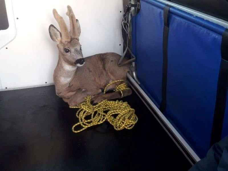 Bambi vast in voortuin