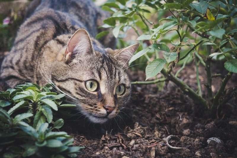 Maart: Krolse katten