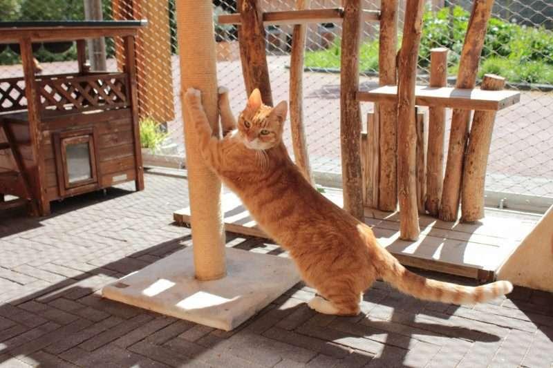Sponsor mee voor nieuwe kattenren