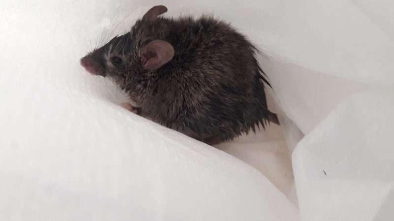 Bang muisje neemt verkeerde afslag