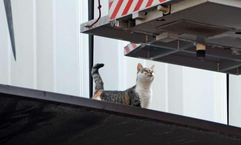 Kat op richel aan Grote Marktstraat